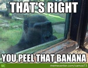 pervert-gorilla_o_2475763